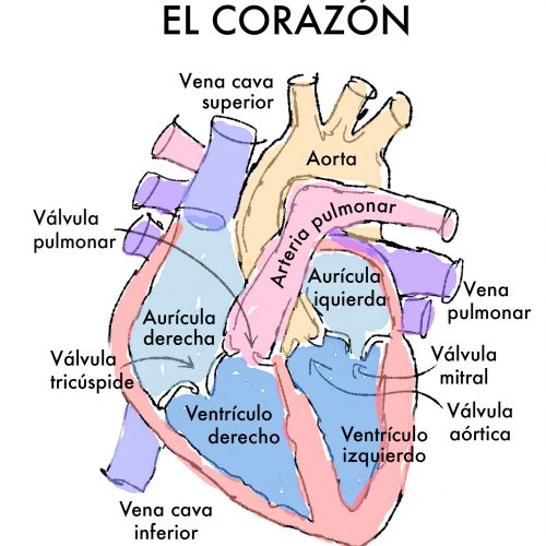 Podemos ayudarte_Quiero conocer más sobre mi cardiopatía